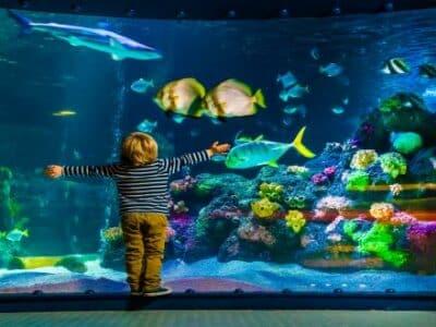 Schmuckbild Sealife Junge vor Aquarium