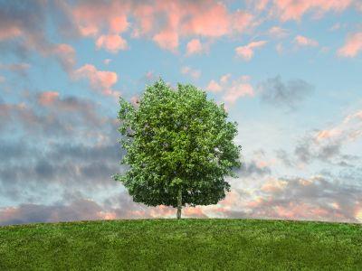 Schmuckbild Nachhaltigkeit Grüner baum auf grüner Wiese mit Regenwolken